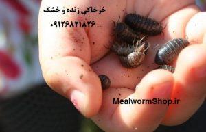 سایت میلورم شاپ | mealwormshop.ir | فروش خرخاکی خشک | خرخاکی زنده | فروش خرخاکی خشک | خرخاکی خشک جهت تغذیه پرندگان ؛ خزندگان ؛ دوزیستان ؛ طیور ؛ ماکیان ؛ ماهی ها و بسیاری از حیوانات دیگر | خرخاکی خشک منبع کلسیم | خرخاکی منبع کلسیم برای حیوانات می باشد برای پوسته تخم و غیره | buy woodlouse | dry life woodlouse woodlice | خرخاکی فروش | خرید خرخاکی
