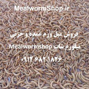 سایت میلورم شاپ | mealwormshop.ir | فروش میل ورم زنده و خشک عمده | فروش میل ورم عمده و جزئی | کرم خشک شده میل ورم و سوپر ورم | کرم خشک شده میل ورم | سوپر ورم | سوپر ورم خشک | میلورم خشک | میل ورم خشک تجاری | میلورم عمده | عمده فروشی میلورم | میل ورم زنده عمده | میلورم عراق | میلورم پاکستان | افغانستان میلورم