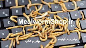 سایت میلورم شاپ mealwormshop.ir | فروش میل ورم زنده گرمی | فروش میل ورم زنده با کیفیت | میلورم خشک | میلورم زنده | میل ورم زنده | میل ورم بسته بندی | فروشگاه میل ورم خرید و فروش میل ورم | قیمت میل ورم زنده | قیمت هر کیلو میل ورم | فروش کرم میل ورم در کرج | میلورم در تهران