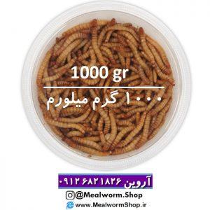 سایت میلورم شاپ mealwormshop.ir | فروش میل ورم زنده 1000 گرم | فروش میل ورم زنده هزار گرم | میلورم خشک | میلورم زنده | میل ورم زنده | میل ورم بسته بندی | فروشگاه میل ورم | میلورم یک کیلو | میل ورم کیلویی