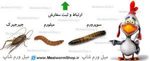 سایت میل ورم شاپ  mealwormshop.ir   نحوه ثبت سفارش یا ارتباط با میل ورم شاپ     مسئول فروش میل ورم شاپ   ثبت سفارش میل ورم   ثبت سفارش سوپرورم سوپر میل ورم   ثبت سفارش جیرجیرک   جیرجیرک زنده و خشک   سوپرورم زنده و خشک   میل ورم زنده و خشک   میلورم شاپ   فروشگاه میلورم   meal worm shop   superworm shop   super worm tehran karaj